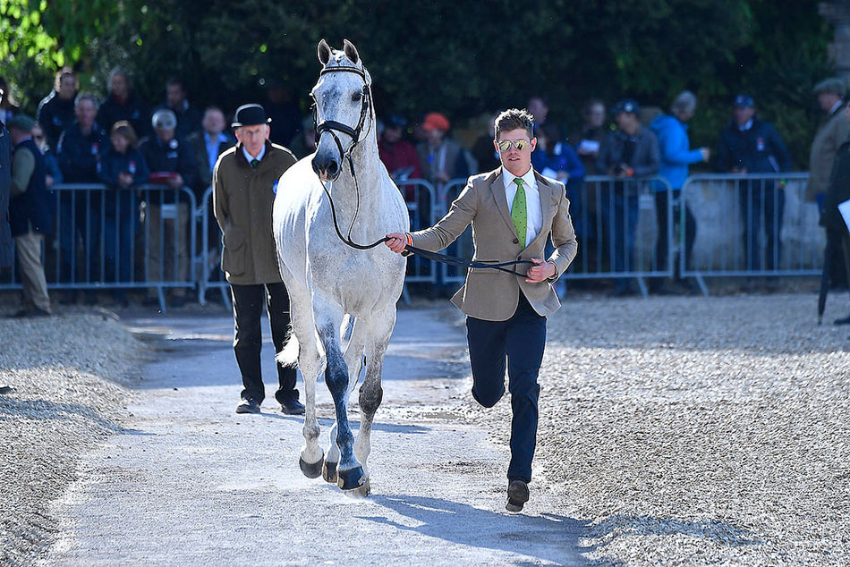 The Trot Up at Badminton Horse Trials
